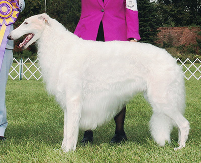 Top Conformation Borzoi 2018