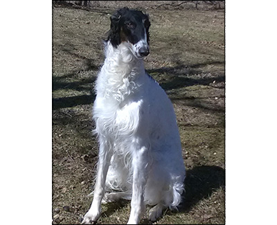 Top High-Scoring Rally Borzoi 2018