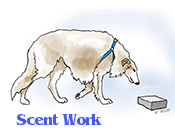 A Borzoi in scent work