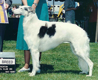Top Best of Opposite Sex Borzoi 1988