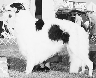 Top Best of Opposite Sex Borzoi All-Breed 2002