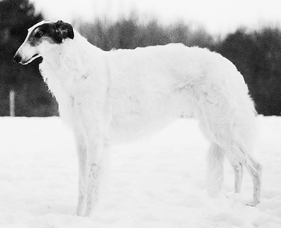 Top Best of Opposite Sex Borzoi Breed 2002