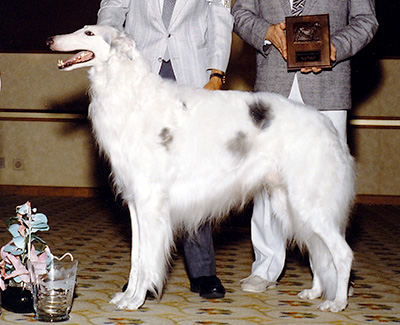 Top Conformation Borzoi 1988