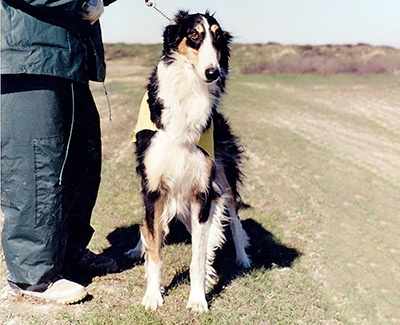 Top Open Field Coursing Borzoi 1988