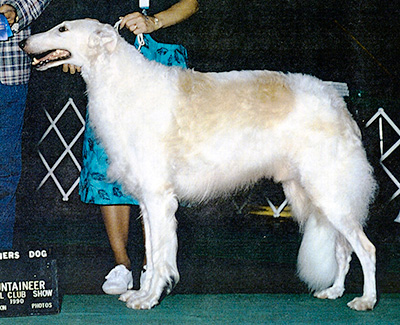 Top Obedience Borzoi 1988
