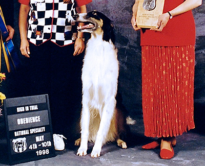 Top Obedience Borzoi 1998