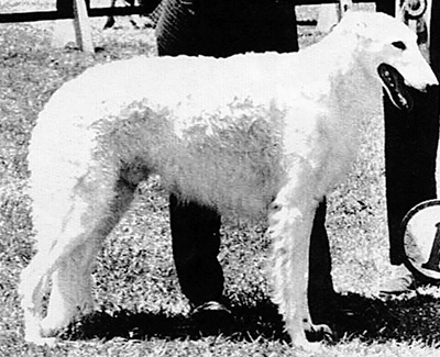 1958 Winners Dog