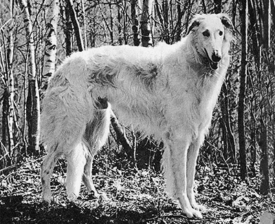 1970 Dog, 6 months and under 9 - 3rd