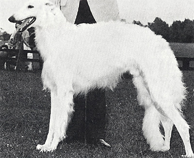 1970 Dog, 9 months and under 12 - 2nd