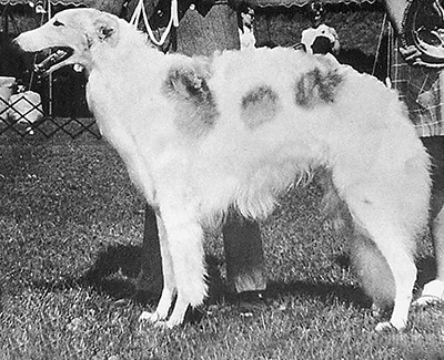 1970 Dog, Bred by Exhibitor - 1st