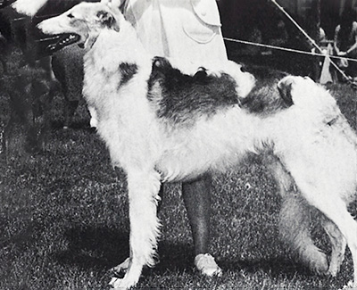 1970 Dog, Bred by Exhibitor - 4th