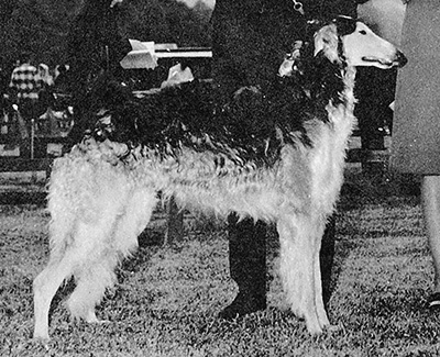 1973 Dog, Bred by Exhibitor - 1st