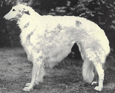 1973 Dog, Veteran 7 years and under 10 - 1st
