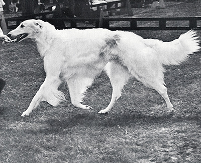 1973 Reserve Winners Dog