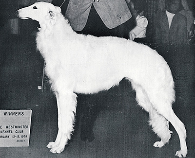 1978 Bitch, Bred by Exhibitor - 1st