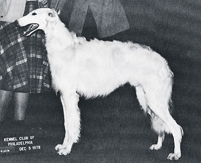 1978 Dog, Bred by Exhibitor - 2nd