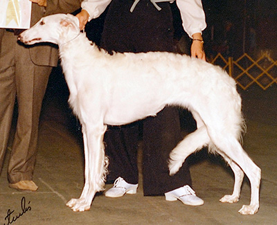 1981 Bitch, Bred by Exhibitor - 4th