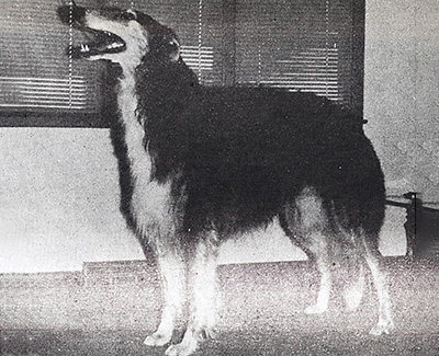 1981 Dog, Open - 3rd