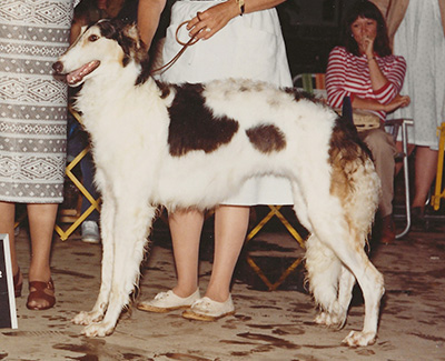 1982 Bitch, Bred by Exhibitor - 1st
