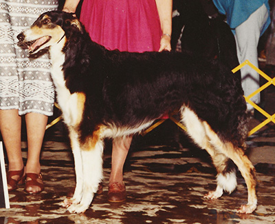 1982 Dog, 9 months and under 12 - 1st