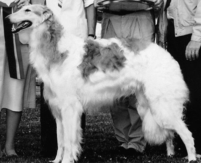 1982 Dog, Bred by Exhibitor - 4th