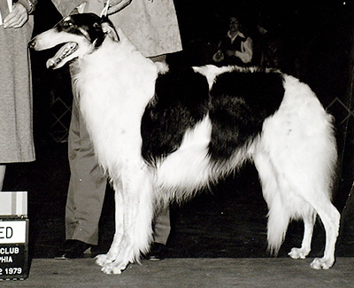 1982 Veteran Dog - 1st