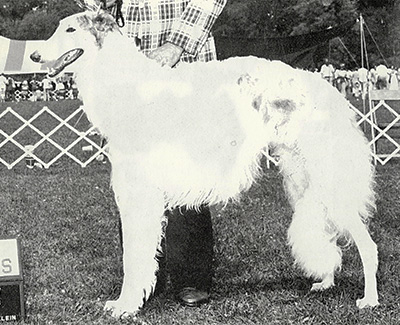 1982 Veteran Dog - 2nd