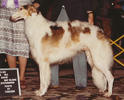 1982 Reserve Winners Dog