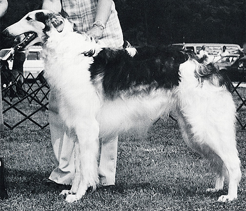 1982 Sweepstakes Dog, 12 months and under 18 - 3rd