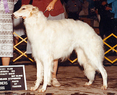 1982 Winners Dog