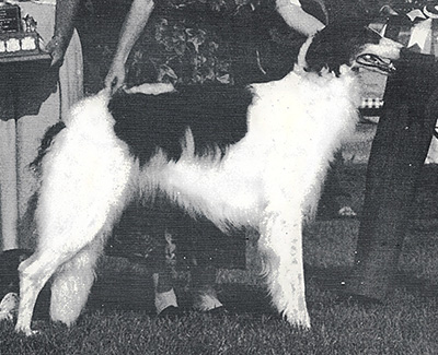 1987 Bitch, Bred by Exhibitor - 4th