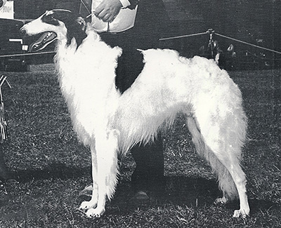 1987 Dog, Bred by Exhibitor - 2nd