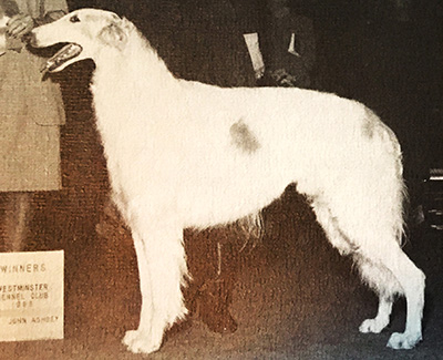 1987 Dog, Bred by Exhibitor - 4th
