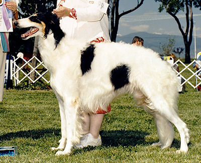 1987 Dog, Bred by Exhibitor - 1st