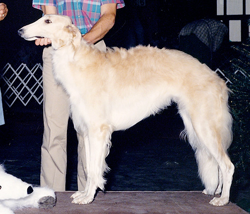 1987 Best in Puppy Sweepstakes