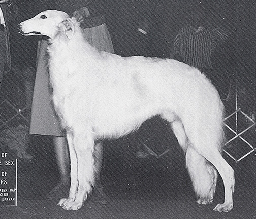 1988 Dog, Bred by Exhibitor - 1st