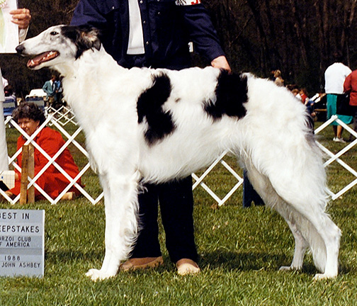 1988 Dog, Bred by Exhibitor - 3rd