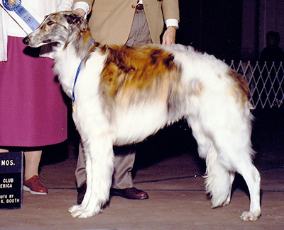 1990 Dog, 12 months and under 18 - 1st