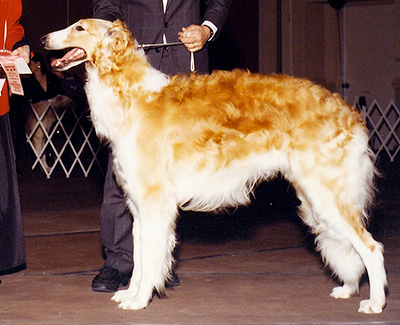 1990 Dog, 12 months and under 18 - 2nd