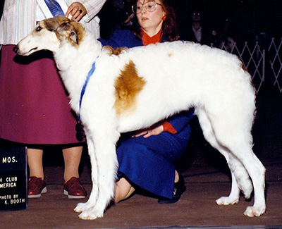 1990 Dog, 6 months and under 9 - 1st