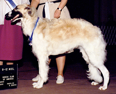 1990 Dog, 9 months and under 12 - 1st
