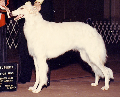 1990 Futurity Bitch, 21 months and under 24 - 1st