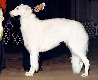 1990 Futurity Dog, 18 months and under 21 - 1st