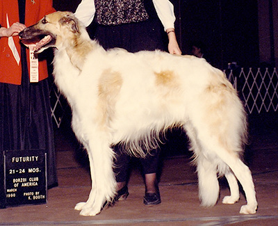 1990 Futurity Dog, 21 months and under 24 - 1st