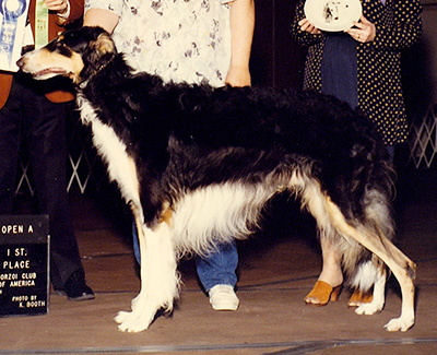 1990 Obedience Open Class 'A' - 1st