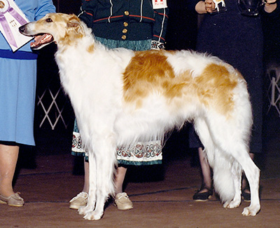 1990 Dog, Bred by Exhibitor - 1st