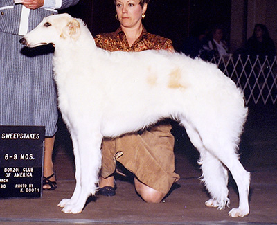 1990 Puppy Sweepstakes Bitch, 6 months and under 9 - 1st