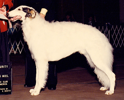 1990 Puppy Sweepstakes Dog, 12 months and under 15 - 2nd