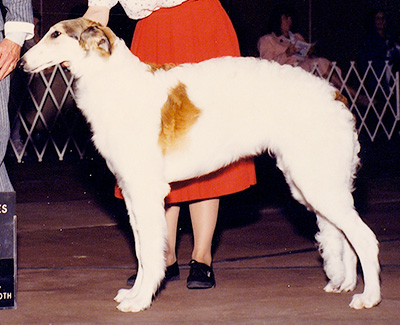 1990 Puppy Sweepstakes Dog, 6 months and under 9 - 1st