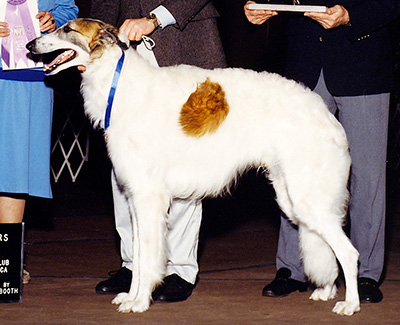 1990 Futurity Dog, 21 months and under 24 - 2nd